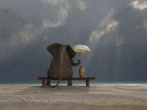 bigstock-elephant-and-dog-sit-under-the-41672560