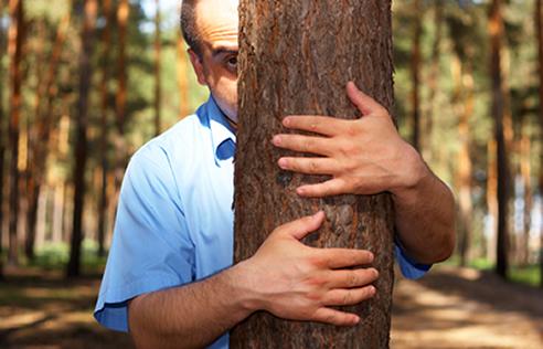 tree-hold